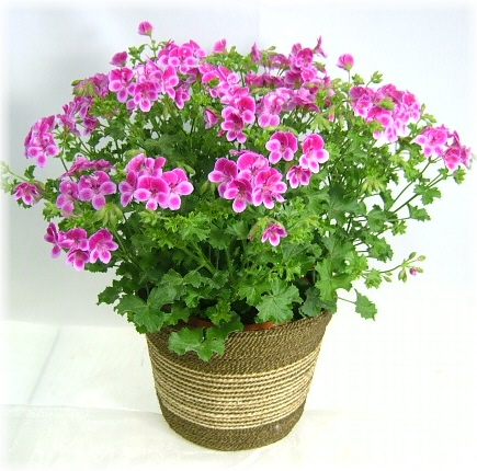 季節の花鉢