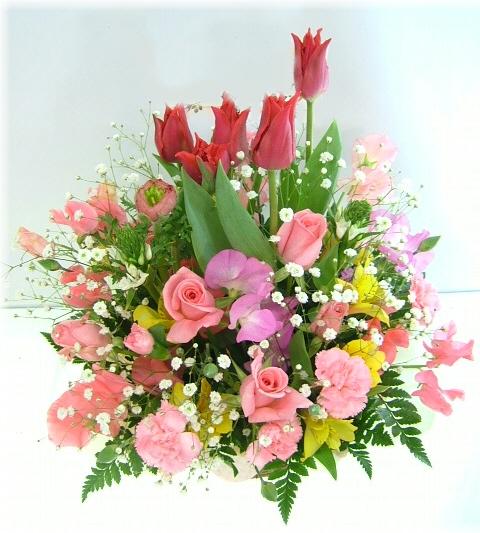 2 月 誕生 花 2月2日の誕生花(誕生日の花言葉)今日は何の日